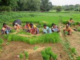 Kisan tribe village farming